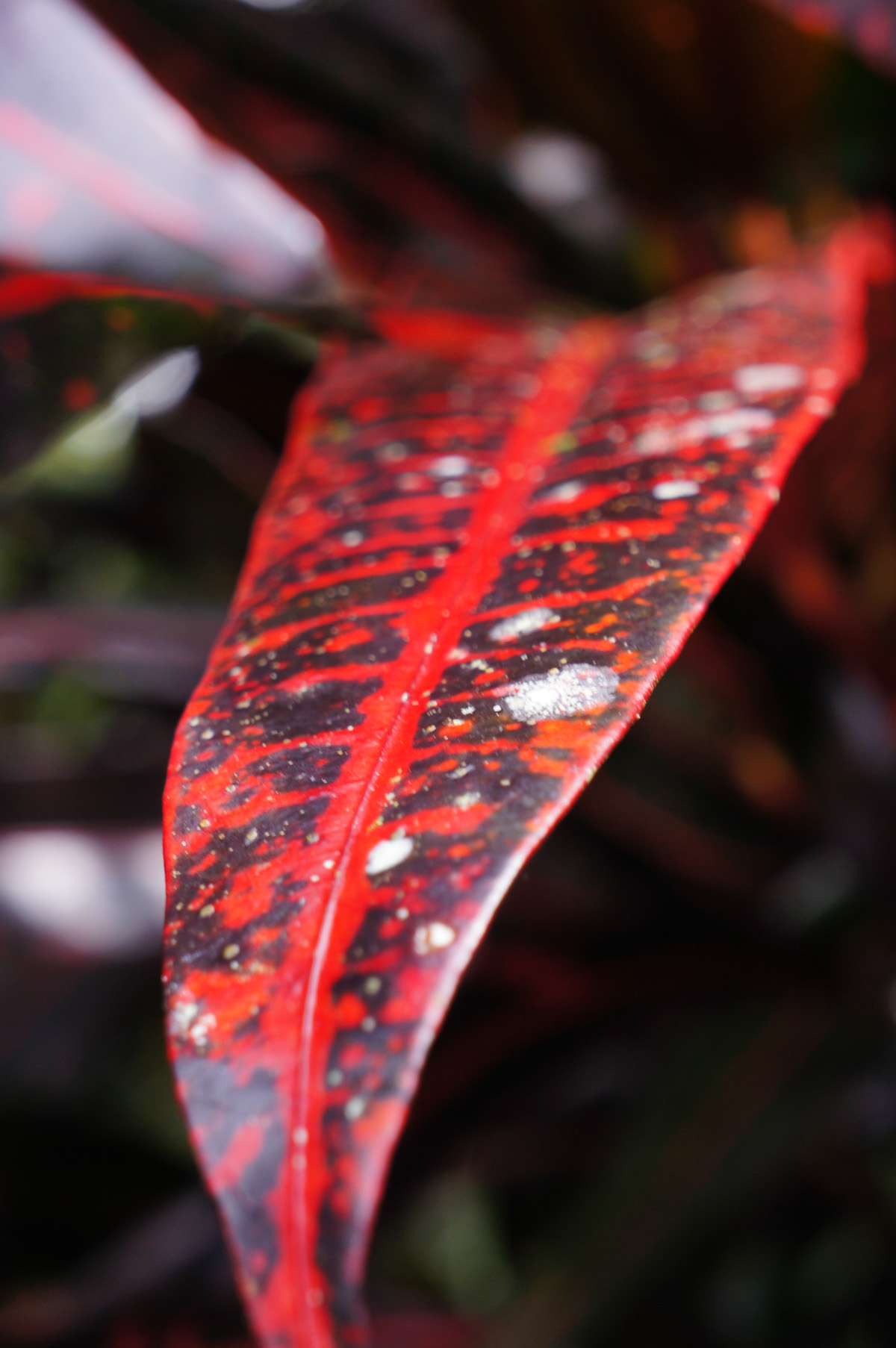 There was gorgeous foliage everywhere, and leaves of all colors. This crimson one was particularly beautiful.