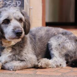 Malee's Dog
