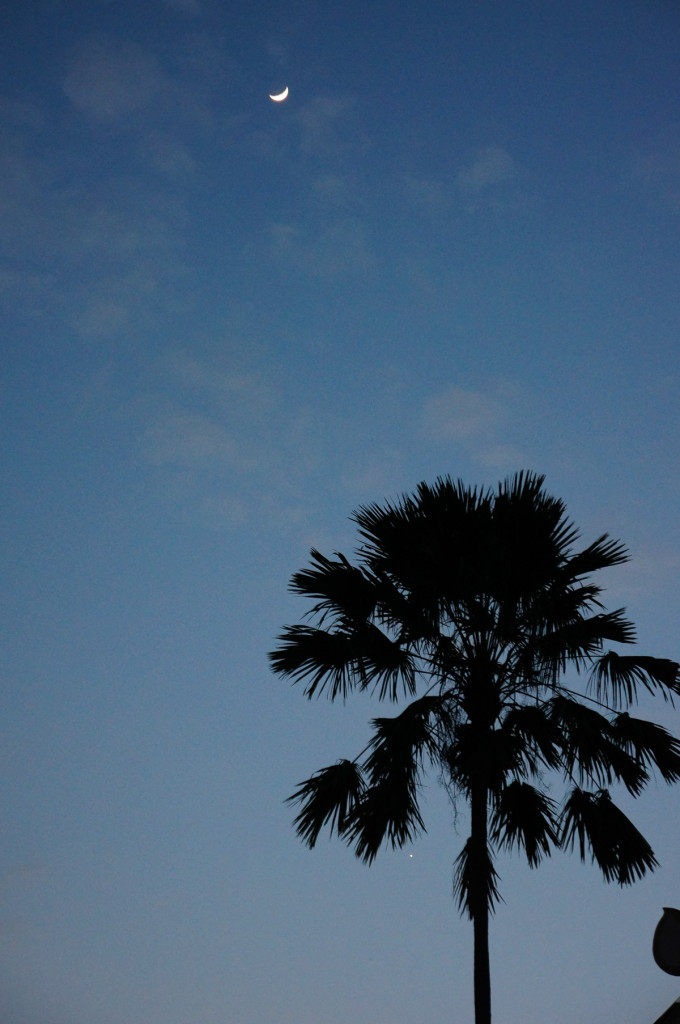 The moon and a palm tree and a few wispy clouds
