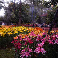 ASEAN flower festival in Chiang Rai