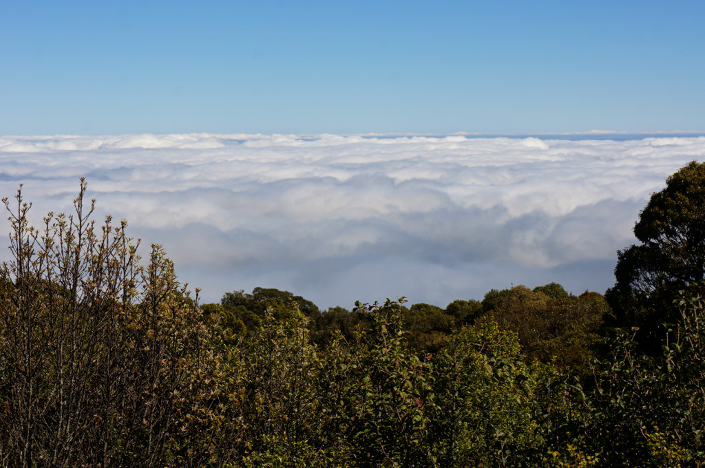 The clouds were a still lake as far as we could see at the peak of Doi Inthanon