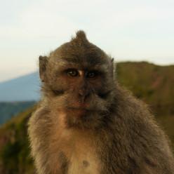 Mount Batur Sunrise-24