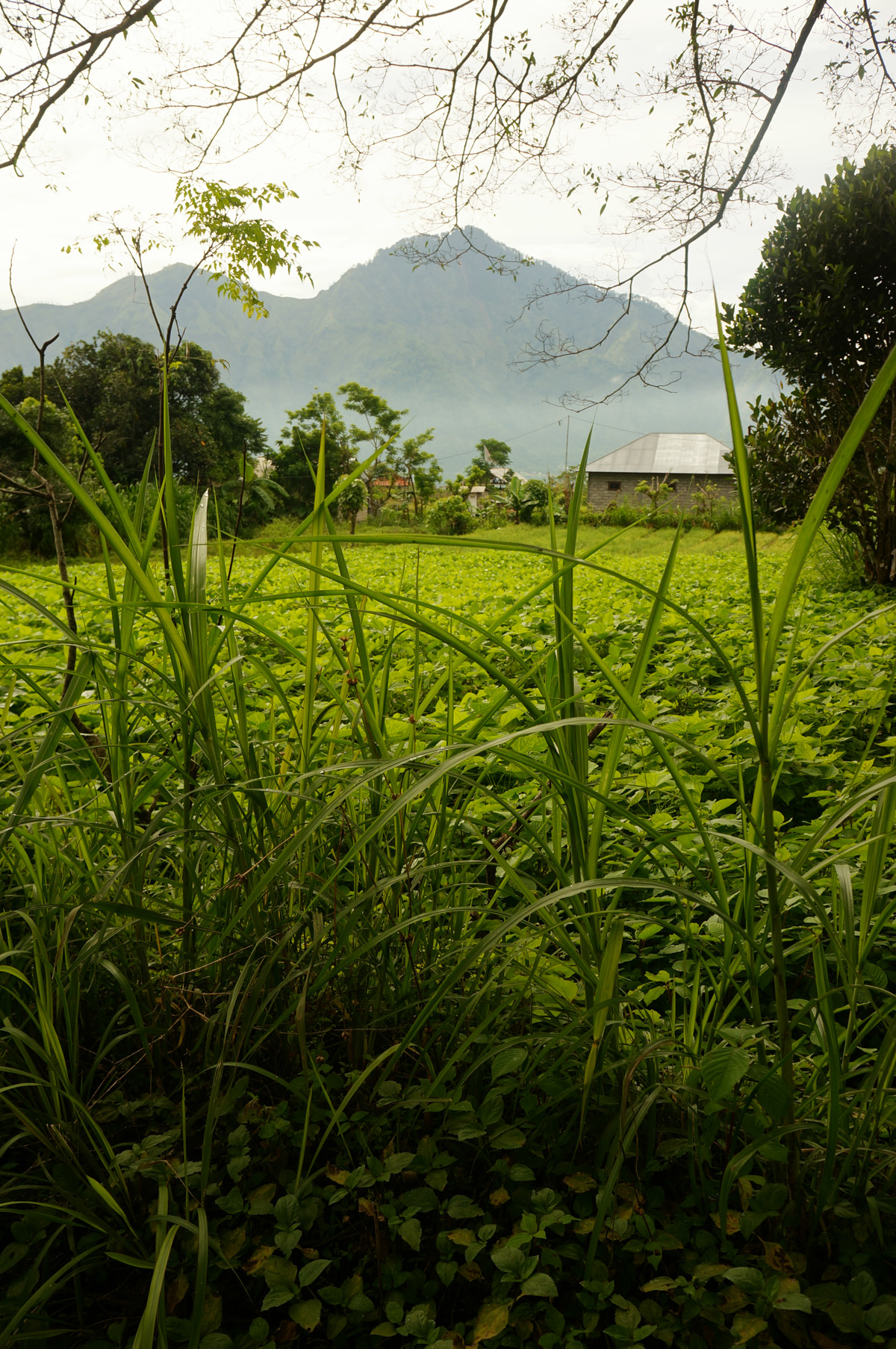 Mount Batur Sunrise-28