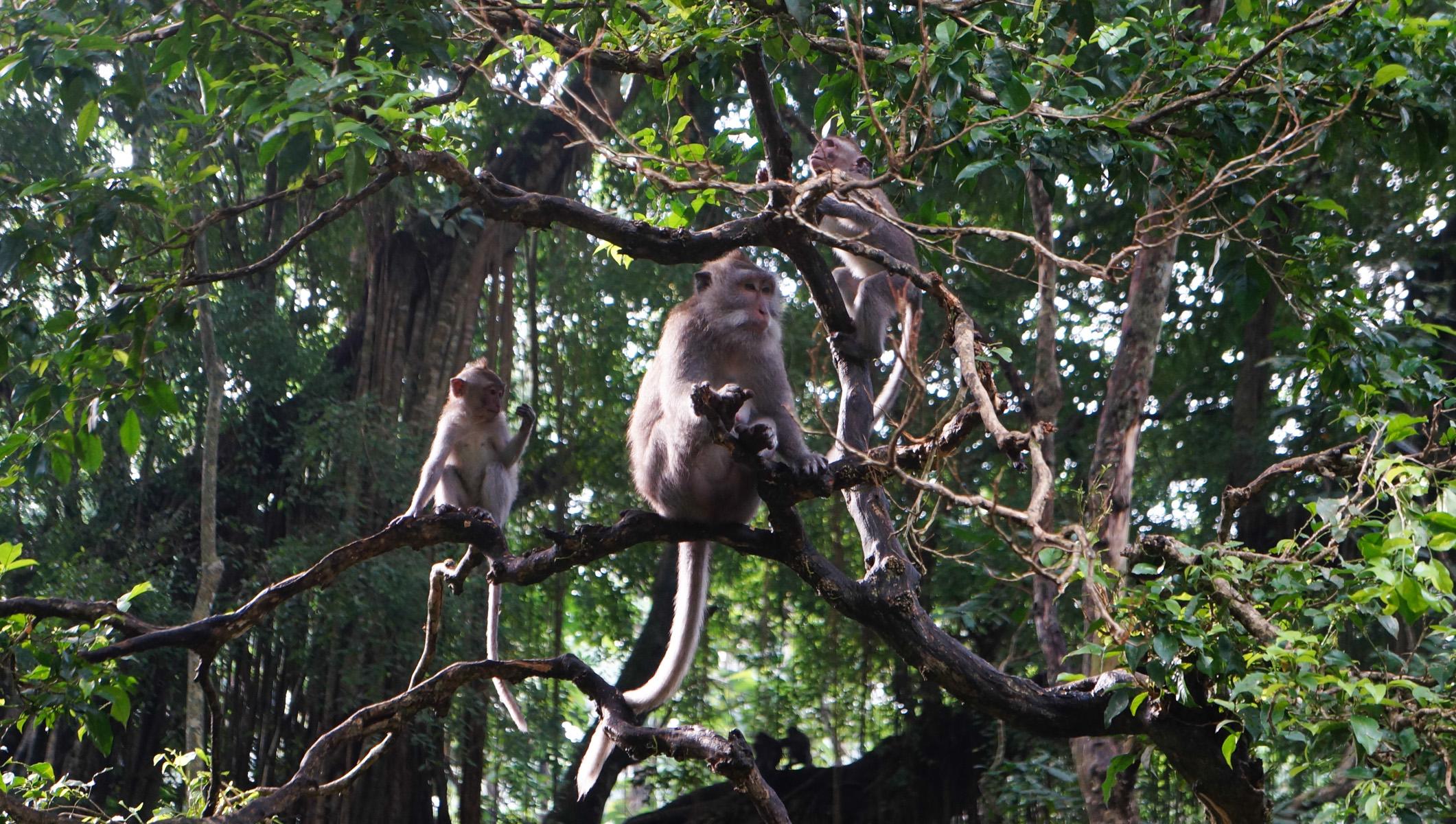 Sacred Monkey Forest-11