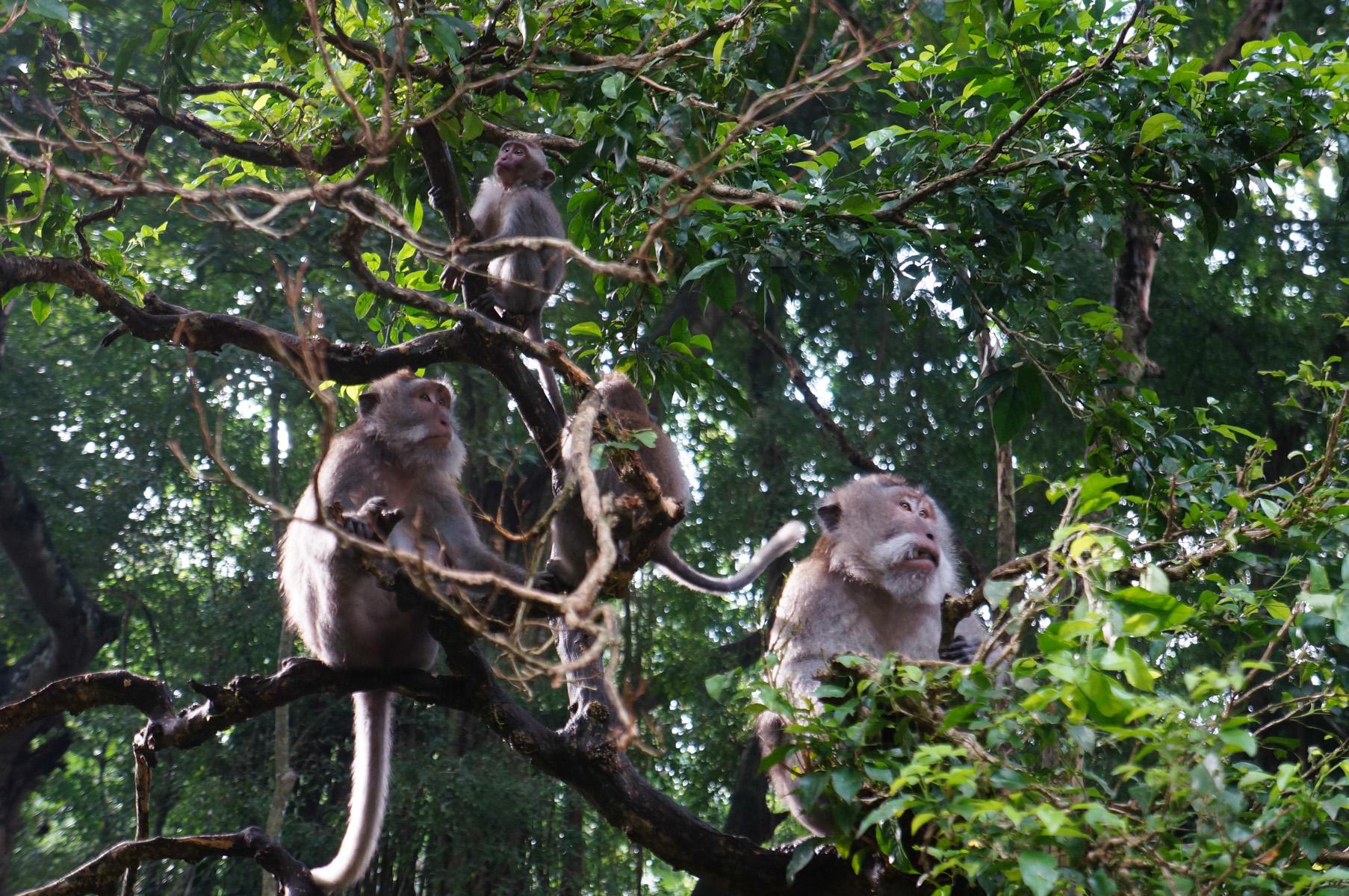 Sacred Monkey Forest-12