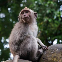 Sacred Monkey Forest-13