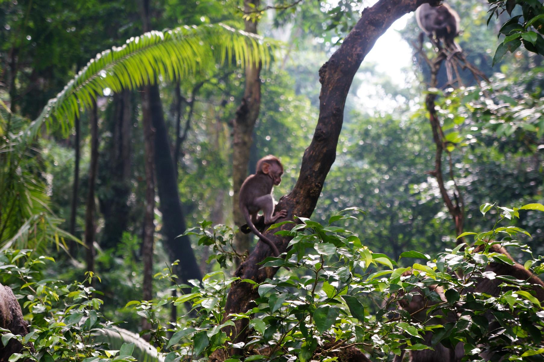 Sacred Monkey Forest-15
