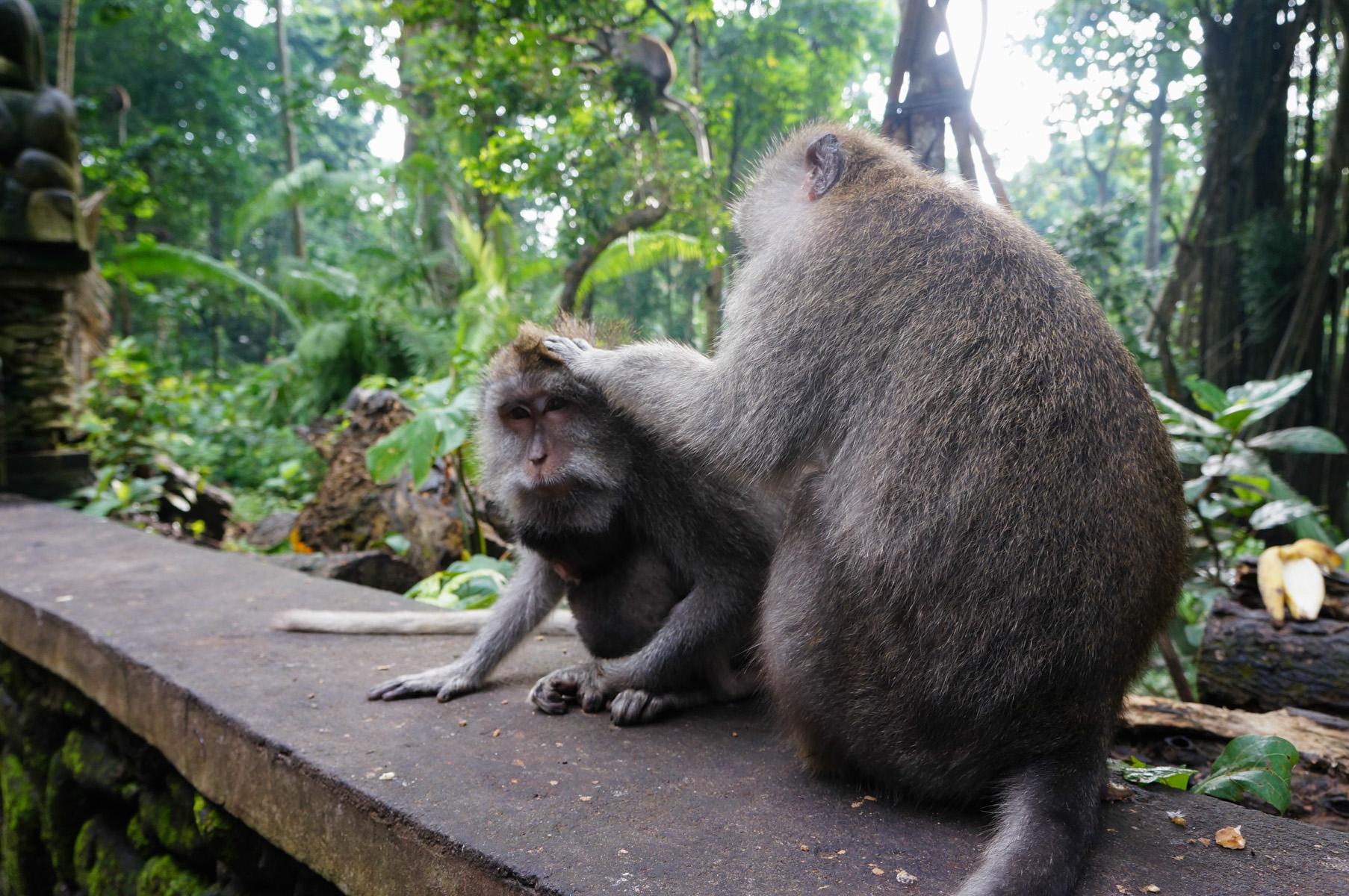 Sacred Monkey Forest-16