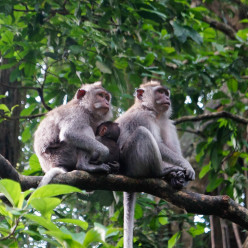 Sacred Monkey Forest-17