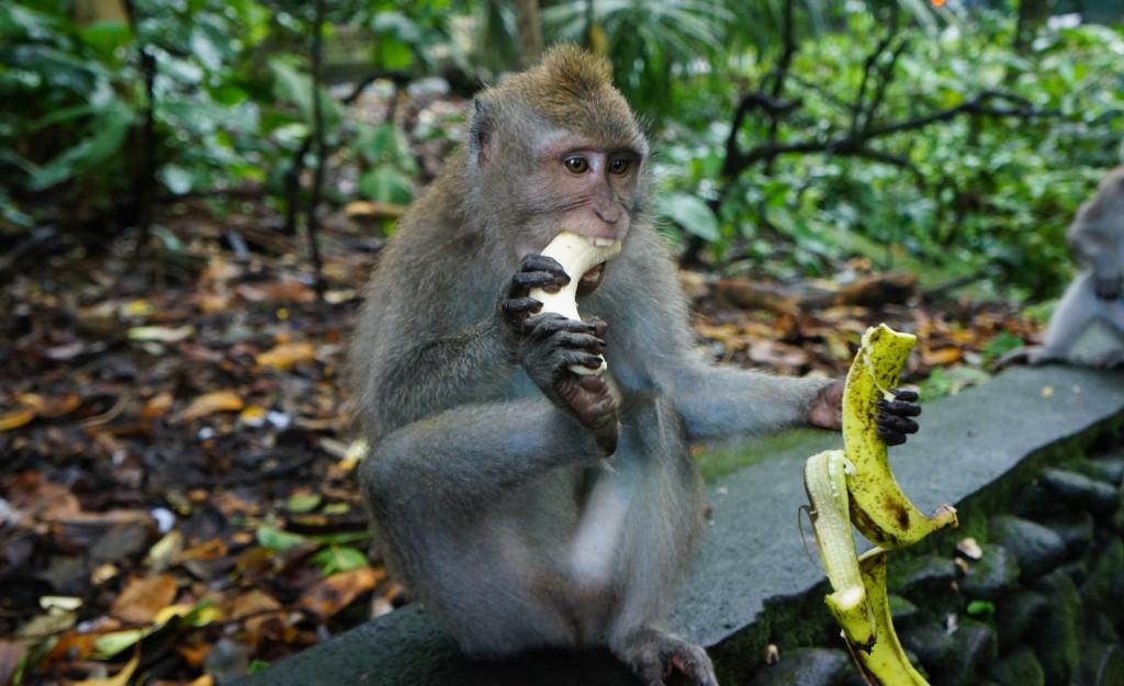 Sacred Monkey Forest-2