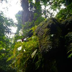 Sacred Monkey Forest-20