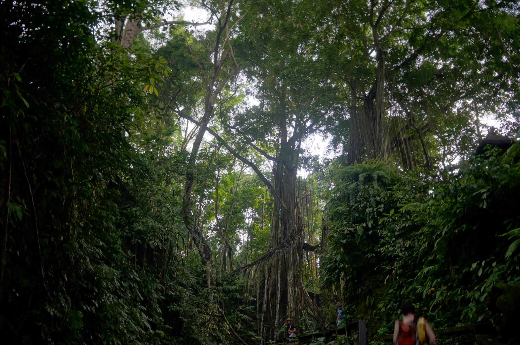 Sacred Monkey Forest-25