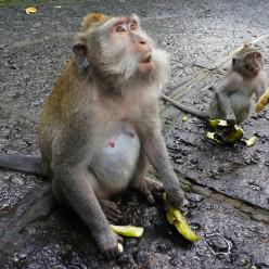 Sacred Monkey Forest-3