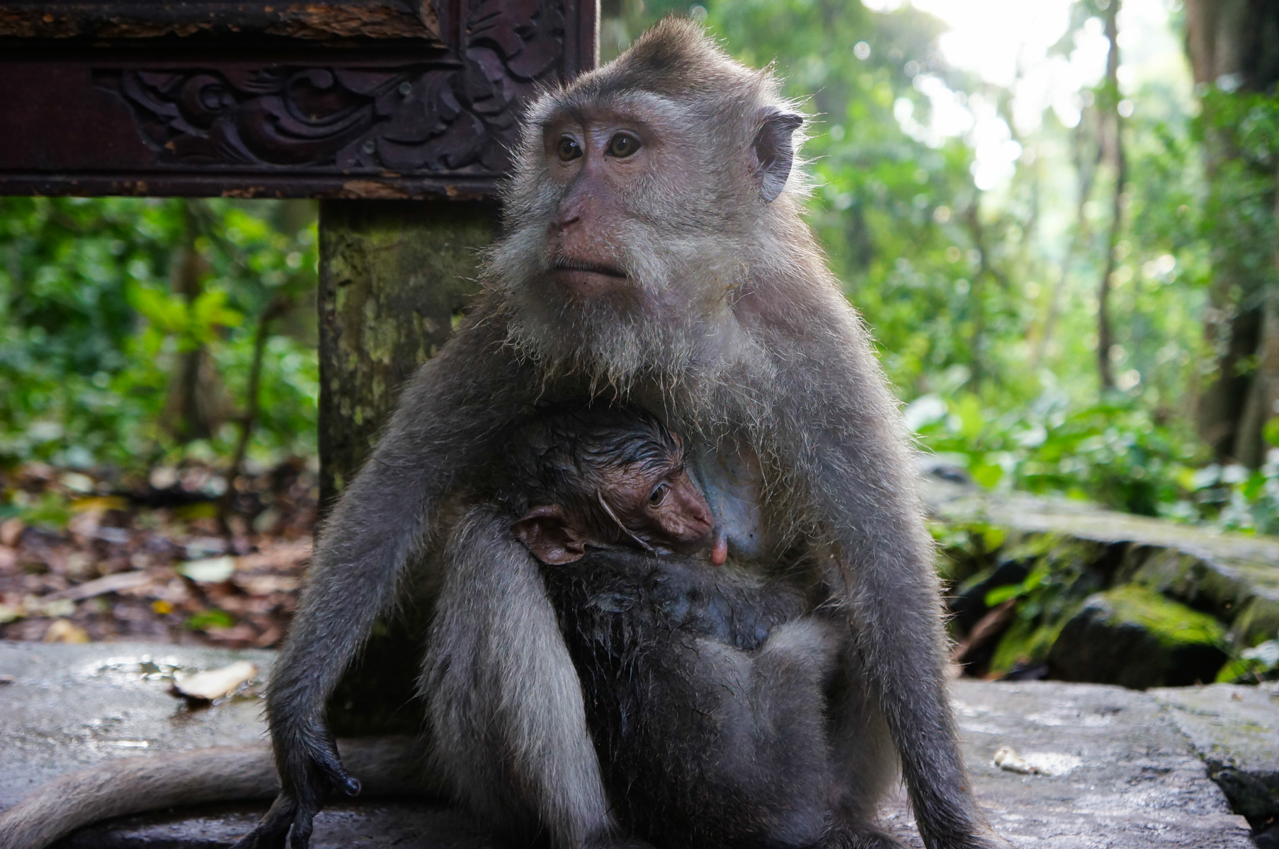 Sacred Monkey Forest-33