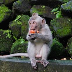 Sacred Monkey Forest-34