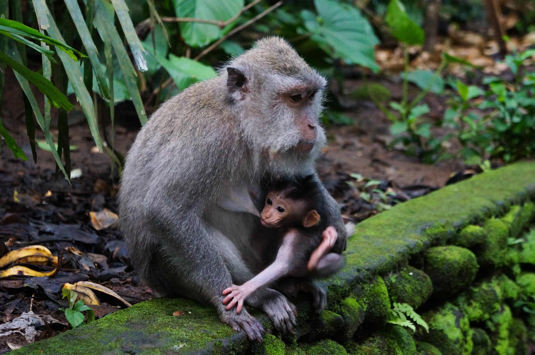 Sacred Monkey Forest-39
