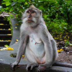 Sacred Monkey Forest-5