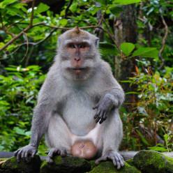 Sacred Monkey Forest-7