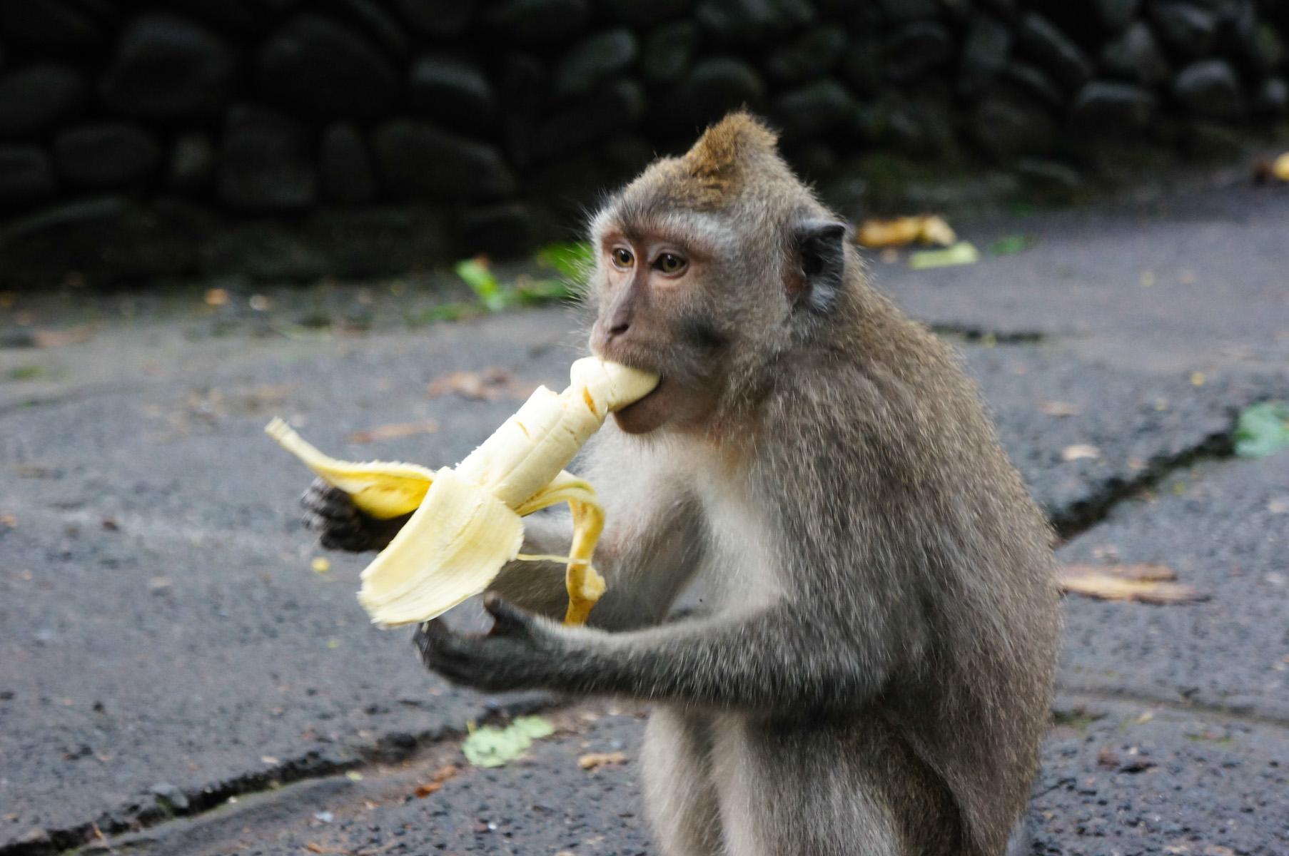 Sacred Monkey Forest-8