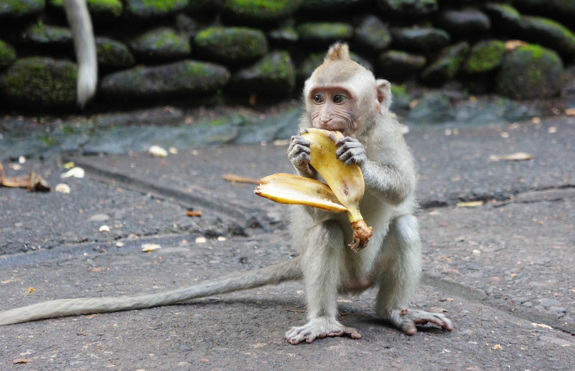 Sacred Monkey Forest-9