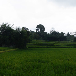 Ubud and Bali Cycling Tour-12