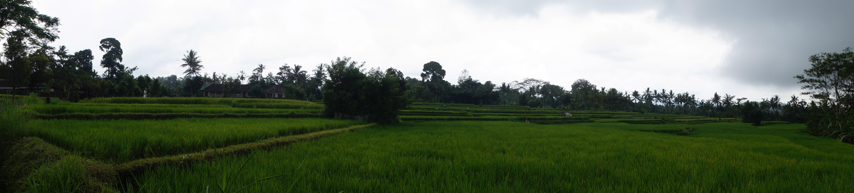 Ubud and Bali Cycling Tour-12
