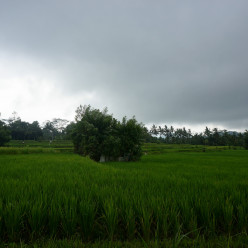 Ubud and Bali Cycling Tour-13