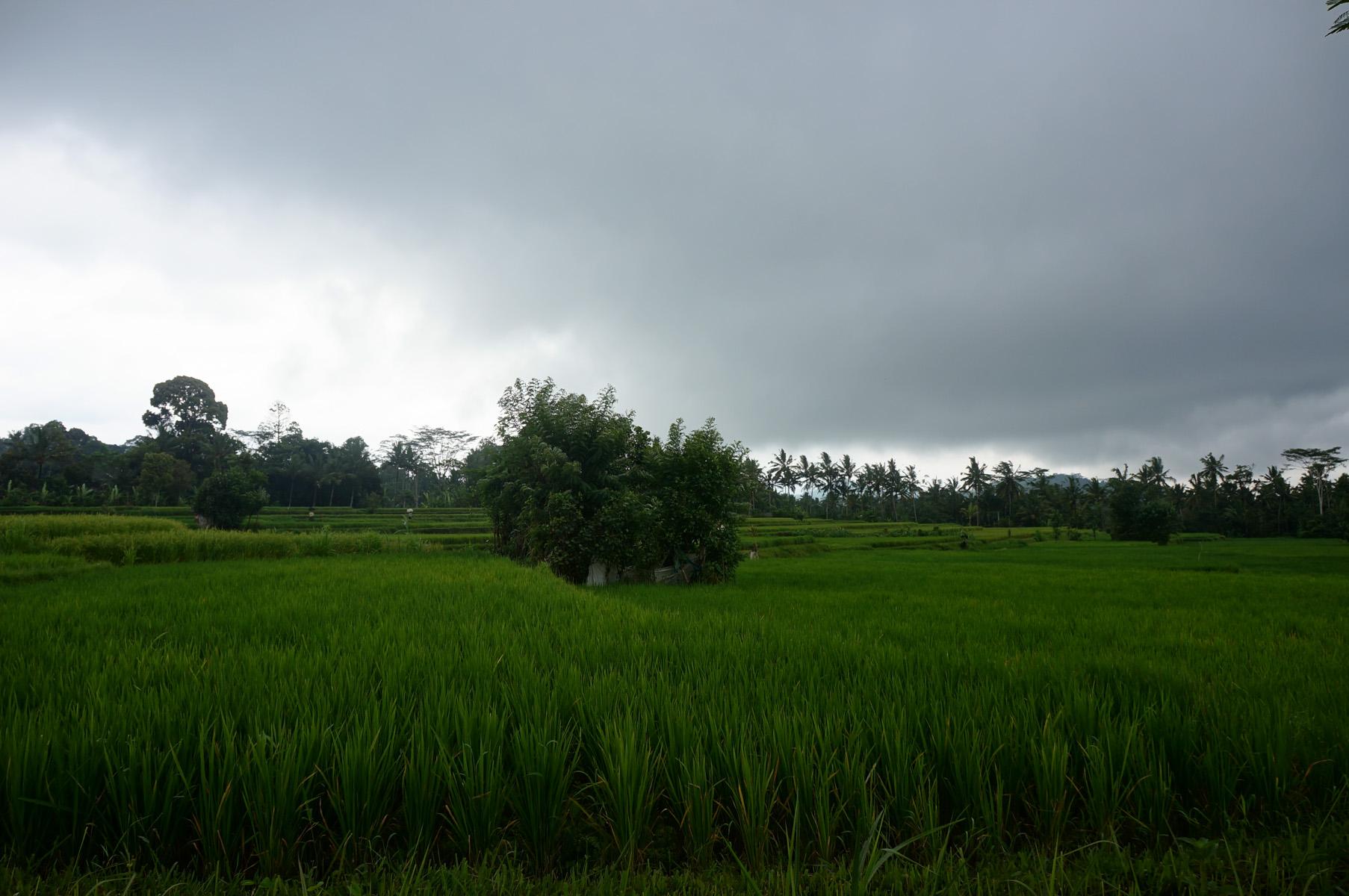 Ubud and Bali Cycling Tour-13