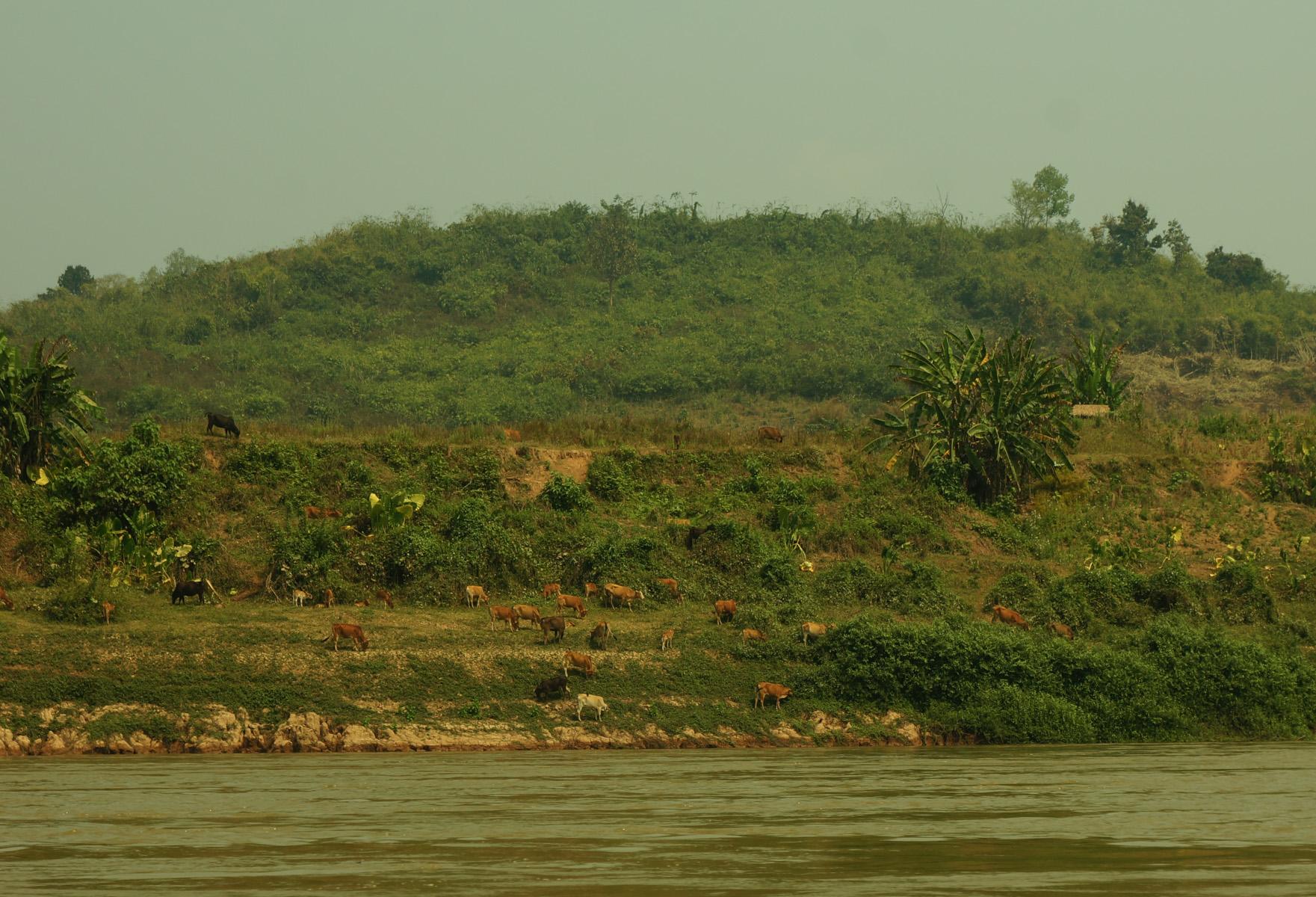Mekong River Trip-17